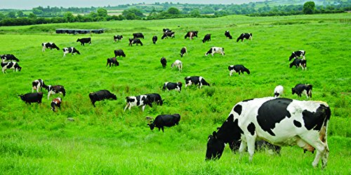 Nature's Seed 0.5 Acre Southern Subtropics Dairy Cow Pasture Seed Blend