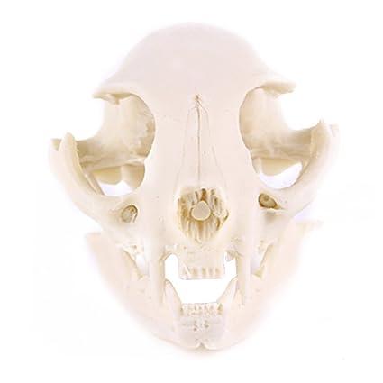 PIXNOR resina gato calavera esqueleto modelo figura decorativa acuario pecera paisaje decoración