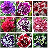 ASTONISH SEEDS: 1: 200pcs / bag colgantes multicolor Petunia semillas de la planta en maceta de Bonsai Balcón Petunia…