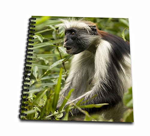 3dRose db_73526_1 Red Colobus Monkey, Volcanoes Nf, Rwanda-AF35 JMC0007-Joe and Mary Ann McDonald-Drawing Book, 8 by 8-Inch
