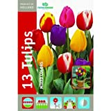 Mixed Tulip Flower Bulb