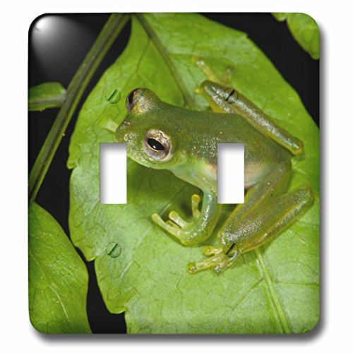 Danita Delimont - Frogs - Santa Cecilia Glass Frog, Yasuni, Amazon, Ecuador. - Light Switch Covers - double toggle switch (lsp_228874_2)