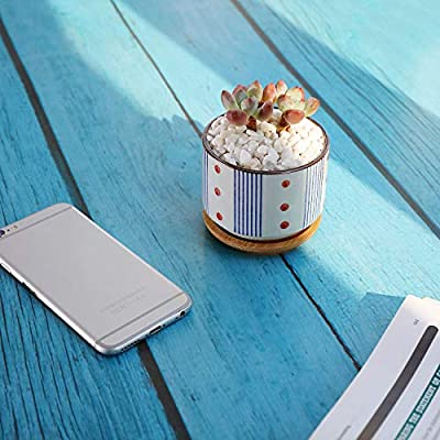T4U 3 Inch Ceramic Succulent Planter Pots with Bamboo Tray, Japanese Style Porcelain Handicraft as Gift for Mom Sister Aunt Best for Home Office Restaurant Table Desk Window Sill Decoration: Garden & Outdoor