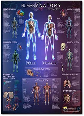 minansostey Anatomical Poster Set - Laminated - Muscular Skeletal Digestive Respiratory