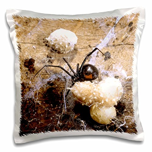 Danita Delimont - Spiders - Madagascar, Malagasy black widow spider, egg sacs-AF24 POX0029 - Pete Oxford - 16x16 inch Pillow Case (pc_75203_1) - Black Widow Spider Egg