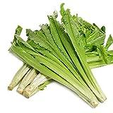 50Seed/Bag Chinese lettuce Seed Leaf lettuce Seed Indian Lettuce House Plant Vegetable Seeds Potted Vegetables
