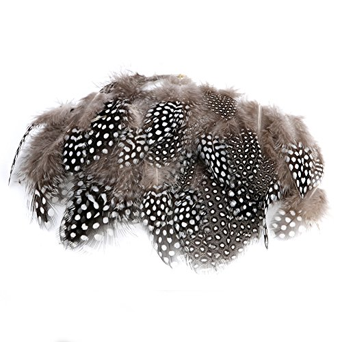 Zadaro 50Pcs Beautiful Natural Pheasant Feathers for Crafting Sewing Costume Millinery DIY (Speckleb)