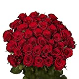 GlobalRose 50 Red Roses- Real Long Stem Flowers- Beautiful Natural Large Blooms