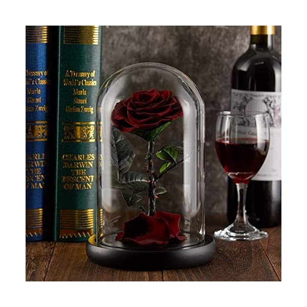puto Preserved Real Rose Eternal Rose in Glass Dome Gift for Her Thanksgiving Christmas Valentine's Day Birthday Mother's Day (Burgundy)