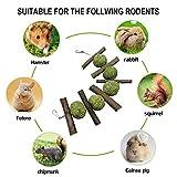 Rabbit Toys, Bunny Chew Toys for Teeth