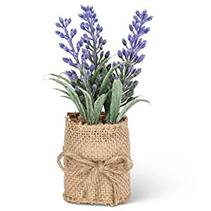 Abbott Collection 27-ESSENCE/218 Lavender in Burlap Wrap, Small