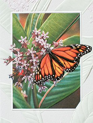 Pumpernickel Press Monarch Butterfly Embossed Blank Note Cards- Boxed Set of 9