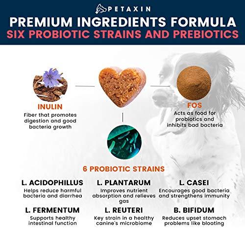 Amazon.com: Probióticos de petaxina para perros – 6 cepas ...