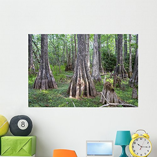 Wallmonkeys Big Cypress National Preserve Wall Mural Peel and Stick Graphic (48 in W x 32 in H) WM360760