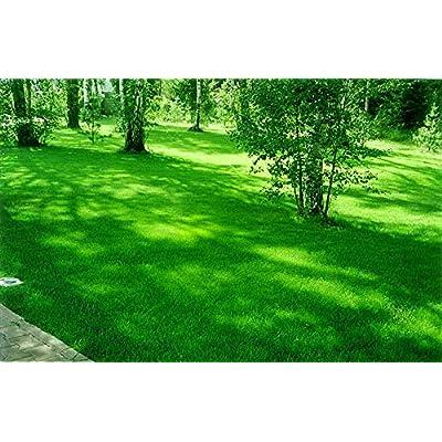 Russian Bluegrass Balin, Seeds of The Bluegrass Meadow from Russia : Garden & Outdoor