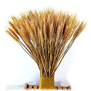 Natural Wheat Dried Flower Grass Bouquet for Home Kitchen Table Wedding Party Centerpieces Decorations 8