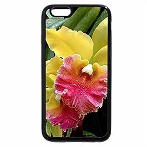 iPhone 6S Plus Case, iPhone 6 Plus Case, Two Tone Cattelayas