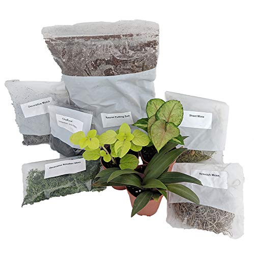 - Terrarium/Fairy Garden Kit with 3 Plants - Create Your Own Living Terrarium