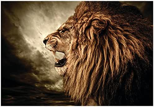 Roaring Lion Against Stormy Sky Poster 19 x 13in