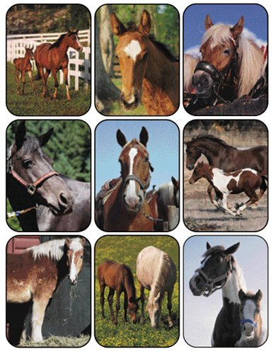 Eureka Horses Real Photos Stickers