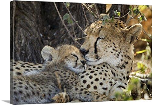 Canvas On Demand Premium Thick-Wrap Canvas Wall Art Print entitled Cheetah with Cub, Ndutu Plains, Tanzania