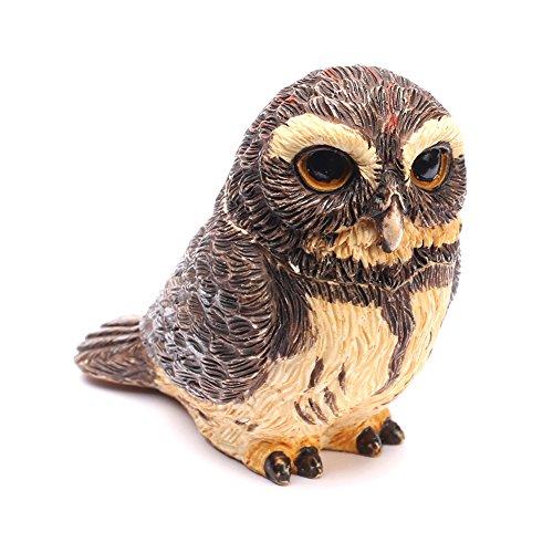 Pot Bellys   Pygmy Owl