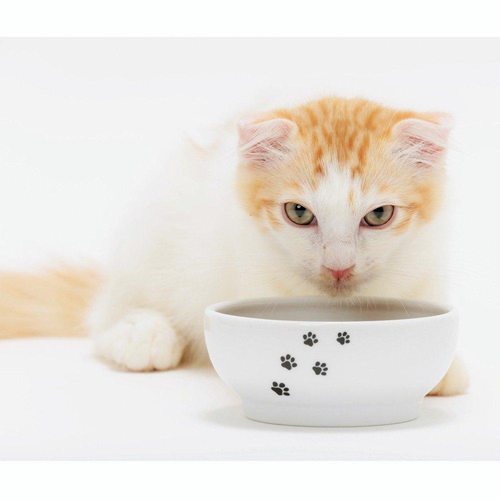 Necoichi Anti-Spill Cat Food Bowl (Cat)