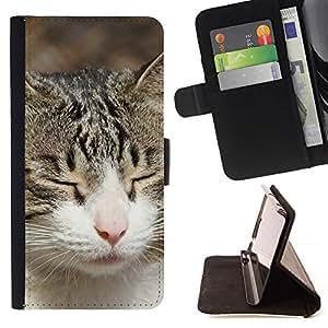 Momo Phone Case / Flip Funda de Cuero Case Cover - Gato American Shorthair Casa Británica; - Sony Xperia Z3 Compact
