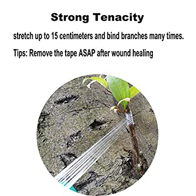 ANCIRS 2 Pack Grafting Tape, Bio-degradable Moisture Barrier, Stretchable Clear Floristry Film for Fruit Tree Plant (Green 0.78in Wide) : Garden & Outdoor