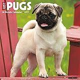 Just Pugs 2017 Wall Calendar (Dog Breed Calendars)