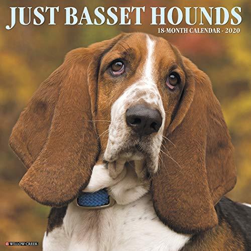 Just Basset Hounds 2020 Wall Calendar (Dog Breed Calendar)
