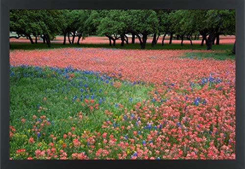 Easy Art Prints Alice Garland's 'Indian Paintbrush and Bluebonnets' Premium Framed Canvas Art - 24