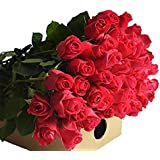 Farm2Door Wholesale Roses: 25 Fresh Hot Pink Roses (Long Stemmed - 50cm) from Colombia - Farm Direct Wholesale Fresh Flowers