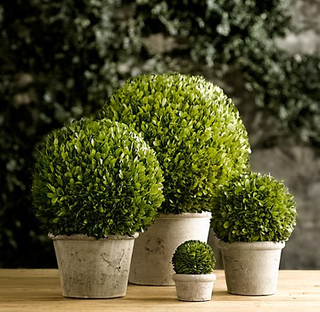 Preserved Boxwood Ball on Pot - 23'' by Tradingsmith