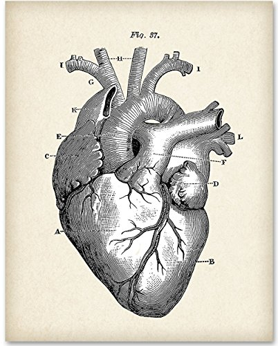 Anatomical Heart - 11x14 Unframed Art Print - Great Gift for Doctors, Medical / Nursing Students or Nurses (Heart Art)