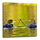 Cheap 3dRose dpp_92011_2 Common Loon Bird on Beaver Lake, Whitefish, Montana – US27 CHA2441 – Chuck Haney – Wall Clock, 13 by 13-Inch