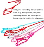 Pety Pet Designer Leather One-Piece Step-in Dog Harness and Leash with Decorative Rivet (Pink)