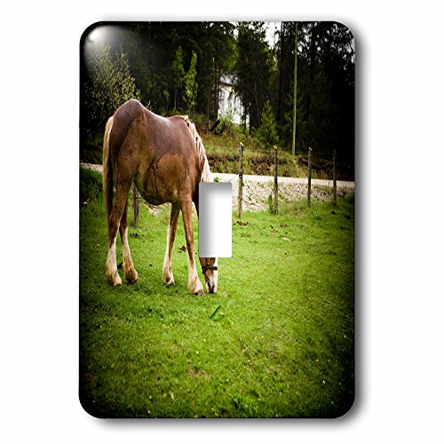 - 3dRose TDSwhite - Horse Equine Photos - Draft Horse Grazing After Bath - Light Switch Covers - single toggle switch (lsp_285476_1)