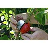 CUTTING GLOBE LARGE TREE 3 pack.TURN BRANCHES INTO TREES fruit trees and ornamental trees.large shrubs and climbers works on indoor and outdoor plants,air layering made easy