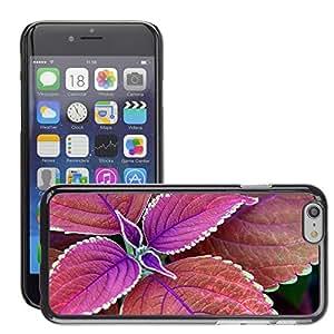 Super Stellar Slim PC Hard Case Cover Skin Armor Shell Protection // M00050447 plant purple macro aero // Apple iPhone 6 4.7