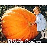 Best Pumpkin Seeds - 30Pieces/pack Vegetable seeds, Atlantic Giant Pumpkin Seeds Garden Review