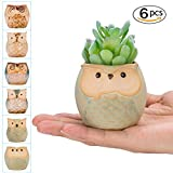 occer 6 Pcs 2.5 Inches Mini Owl Pots Succulents Bonsai Plant pots,Cute Flower Cactus Ceramic Pot,Container Planter With a Hole,Perfect For Home Decoration,Office desk,Kitchen Counter, Best Gift Idea
