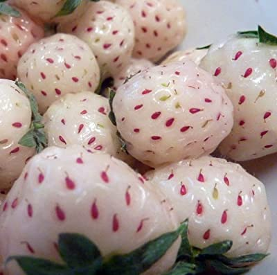 White Carolina Pineberry Plants - 10 Roots -Bareroot-Pineapple/Strawberry Flavor