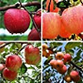 Queind 20pcs/ Bag Mini Tree Seeds Garden Yard Bonsai Fruit Plant