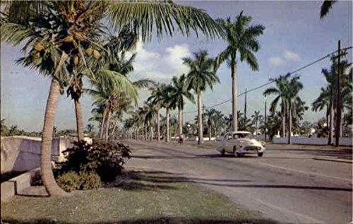 Las Olas Boulevard Ft Fort Lauderdale, Florida Original Vintage - Los Olas Boulevard