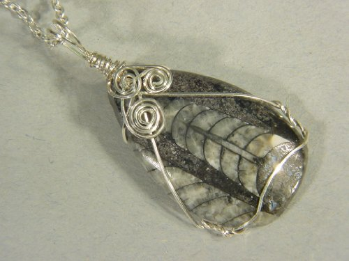 Sterling Silver Wire Wrapped Orthoceras Morocco Nautiloid Pendant with SP Chain Necklace 7946C h