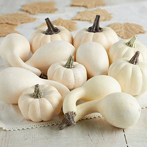 Factory Direct Craft 12 Piece Package of Assorted Harvest Off White Artificial Gourds and Pumpkins For Home Decor, Harvest Embellishing and Displaying by Factory Direct Craft