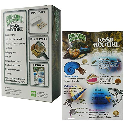 ROY-ROJAS Mega Fossil Dig Kit ,Real Fossils Including Shark Teeth,  Brachiopods, Crinoids Great STEM Science Gift for Paleontology and  Archeology