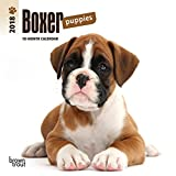 Boxer Puppies 2018 7 x 7 Inch Monthly Mini Wall Calendar, Animals Dog Breeds Puppies