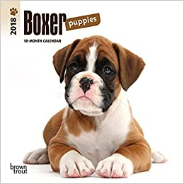 Amazoncom Boxer Puppies 2018 7 X 7 Inch Monthly Mini Wall Calendar